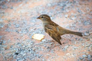 bird-301777_1920
