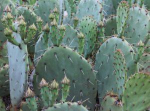 cactus-1430031_1920